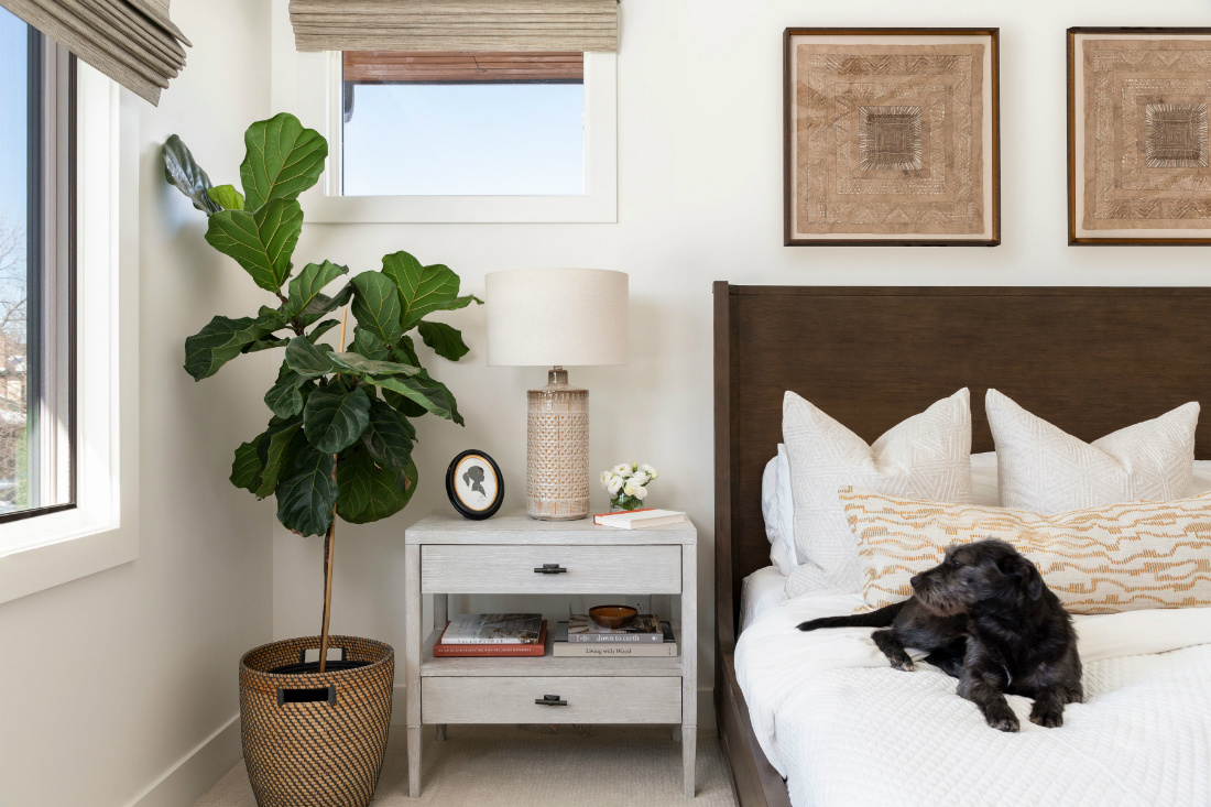 dog-on-master-bedroom-bed-indoor-plant-wall-art